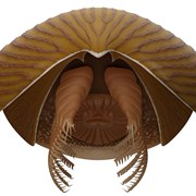 """Древно създание, наречено """"кораб майка"""", е било бич в ранния океан"""