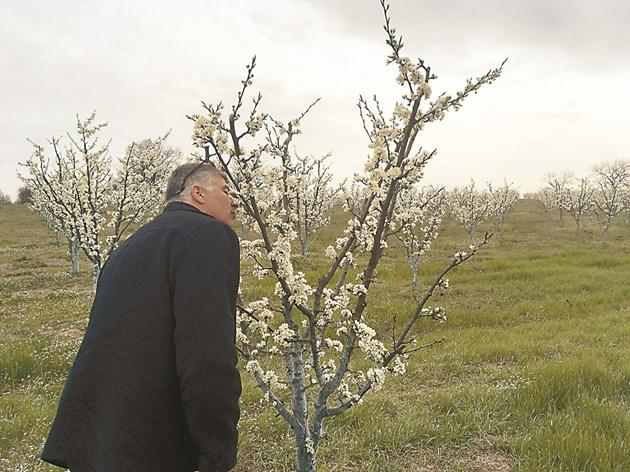 За Янко Георгиев началото на цъфтеж е най-красивият период в градините