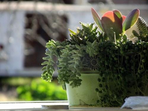 5 мита за растенията, които през зимата отглеждате в дома си