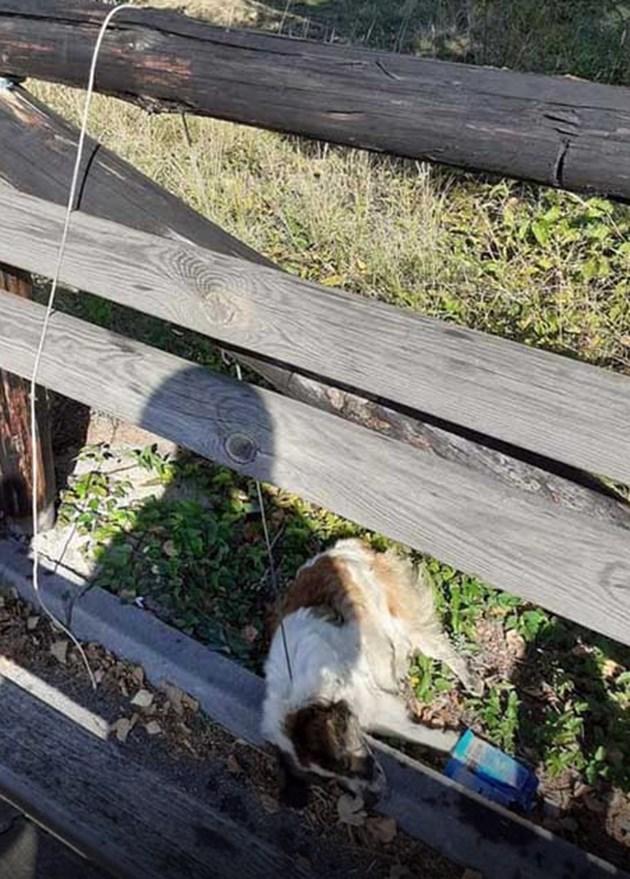 """Ужас! Обесиха кученце в парк """"Рила"""""""