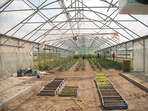 Защита на растенията от болести в парници и оранжерии