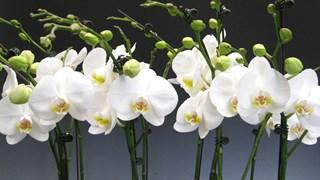 7 стайни растения за заети хора