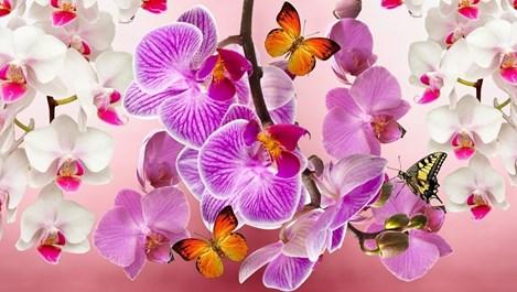 С тази паста орхидеите започват да цъфтят на мига