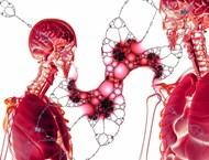 С какво да изчистим токсините от бъбреците и пикочния мехур