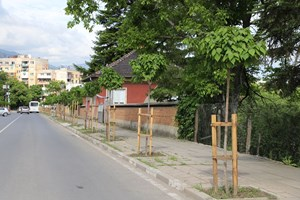С грижа за градската среда - нови дървета, засадени по програмата в Златица