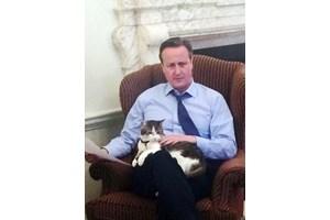 Заради твърдения, че не обича котки, Дейвид Камерън показа снимка с Лари в скута си.