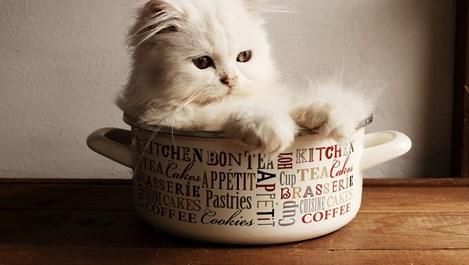 Смешни снимки с котки, които ще ви усмихнат (галерия)