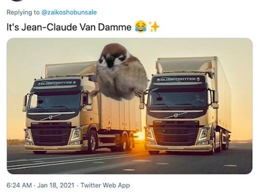 Интернет потребителите се радват на врабче, оприличено на Жан-Клод Ван Дам