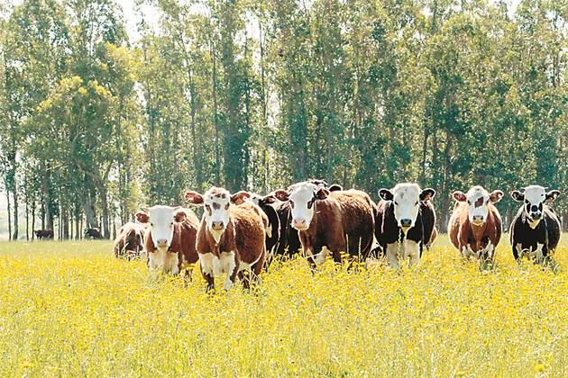 АР позволява да се извършва контрол и наблюдение на всяко животно от стадото както в обора, така и по време на паша