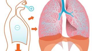 Как да детоксикираме всеки орган, за да не боледуваме