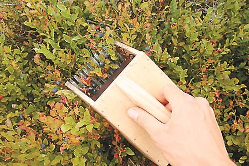 НАПРАВИ СИ САМ: Уред за събиране на боровинки