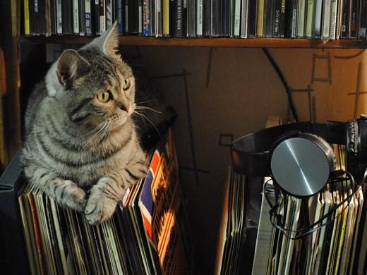 Слушат ли котките музика?