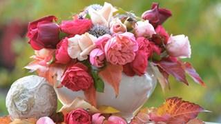 Какво да направим за цветята през ноември