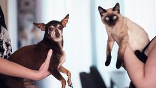 Като котка и куче - как да запознаем домашните си любимци