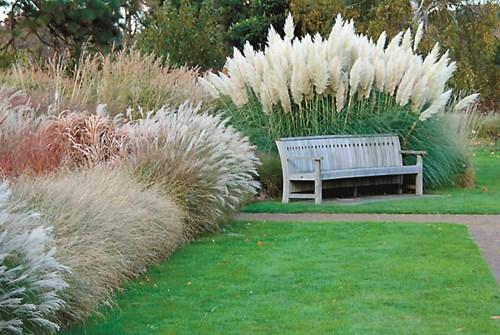 10 причини да засадите декоративни треви