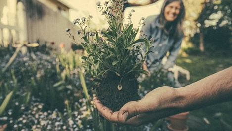 10 съвета за градината преди голямата зима