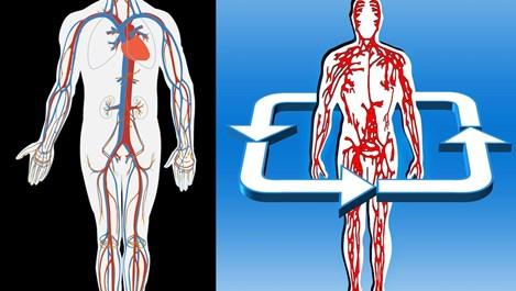 Опасни признаци за запушени артерии