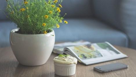 Растения, които пазят дома