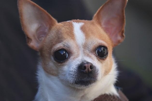 Притежателите на някои породи кучета са по-привлекателни