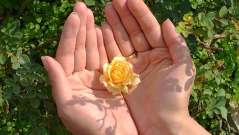 Цветята в козметиката: вълшебните традиционни екстракти