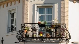 Цветя, подходящи за слънчеви тераси