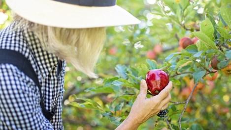 Храни и напитки, които подобряват здравето на жените