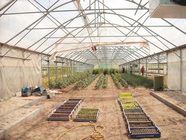 За обеззаразяване на почвата могат да се използват различни методи, които щадят околната среда