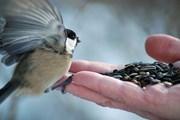 Градина в помощ на птиците