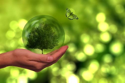 Модерна градина или екологичен рай?