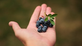 Пропорциите на ръката може да ни предпази от излишни килограми