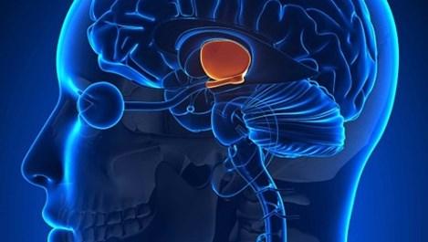 """Учени откриха """"корените на злото"""" в мозъка"""
