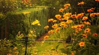 Красива градина, но на каква цена?