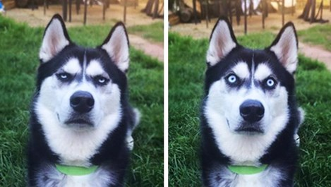 13 безобразно смешни кучешки физиономии