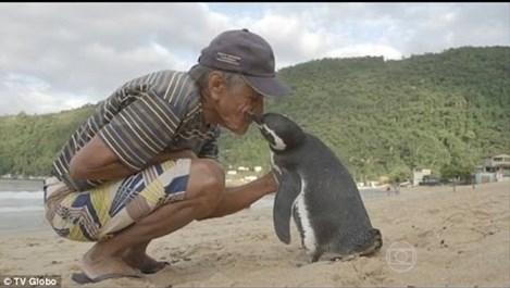 Пингвин пет години поред плува 5000 мили, за да се върне при спасителя си (видео)