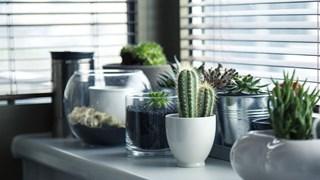 Суперлесни за отглеждане растения, които не искат много светлина