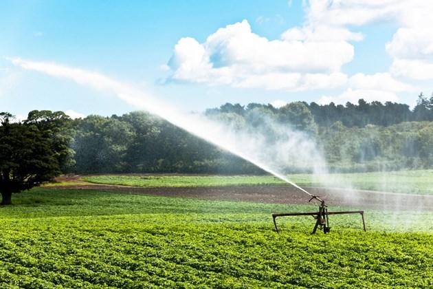 Зеленчуците, царевицата и други култури не дават добър добив без напояване