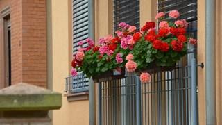 Как да зазимим правилно градината и балкона