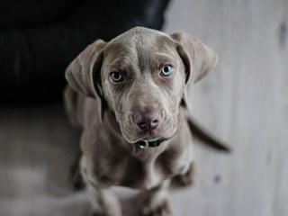 Как кучето подсказва какво му е