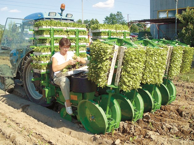 Триредовата Sfoggia икономисва труд и време