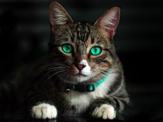 Котешка терапия: 5 ползи от живота с писанки