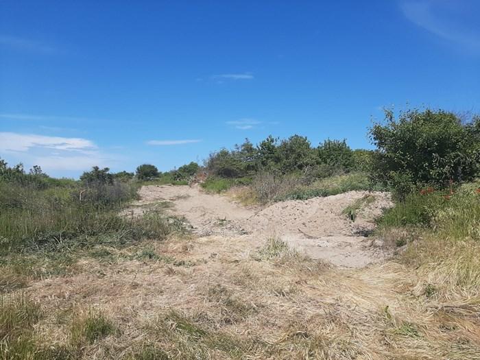 Сиви дюни, цащитени от закона, са били компрометирани, за да се постави дървена пътека към плажа на Ахопол. Снимки:Тони Щилиянова