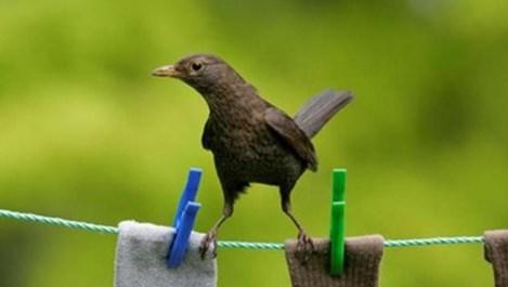 Градските птици са по-умни от останалите