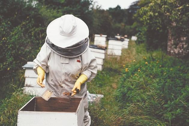 Пчеларят трябва постоянно да е на пчелина. Сега се доразширяват гнездата с восъчни основи