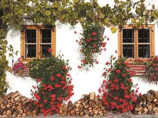 Разкошни цветя за сенчести балкони