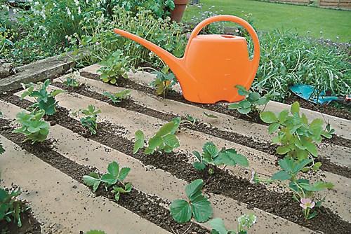 Засадете нова ягодова леха