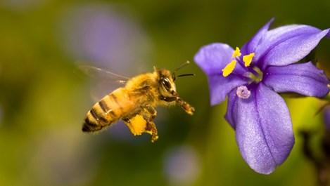 Никакъв алергозан при ухапване от насекоми