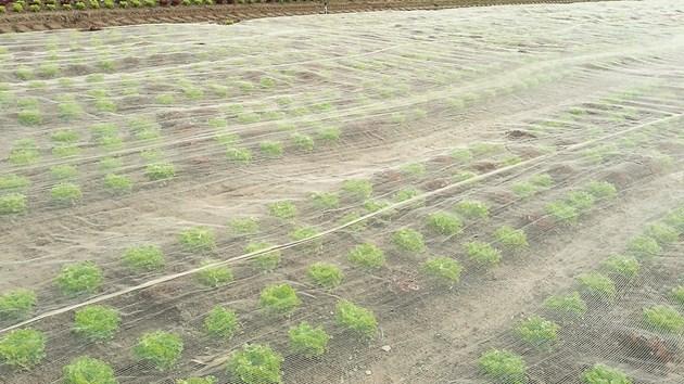 Противоградна защита за зеленчуци