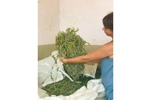 Мурсалски чай в базата в Тутракан  СНИМКА: Девора Недялкова