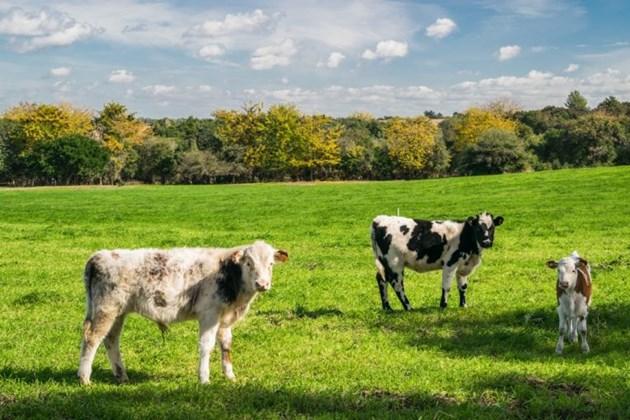 Всяко домакинство в Бокстел се е включило в реализирането на идеята, инвестирайки по 2 000 евро за закупуването на около 20 ха земя около фермата