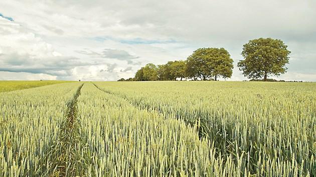 Културите със слята повърхност в известна степен предпазват почвата